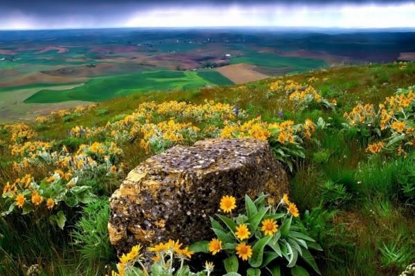 Flores amarillas junto a una roca