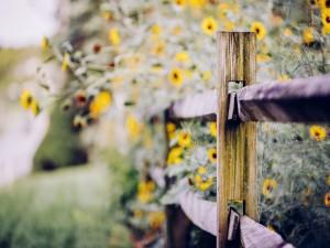 Flores silvestres junto a una valla de madera