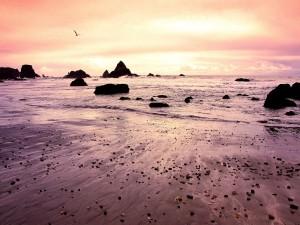 Postal: Gaviota volando sobre una playa