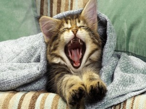 Postal: La boca de un gatito al bostezar