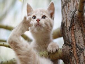 Postal: Gato en la rama de un árbol