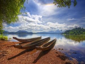 Postal: Canoas de madera en la orilla de un río