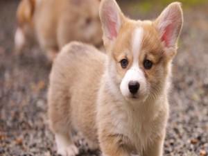 Un lindo cachorro
