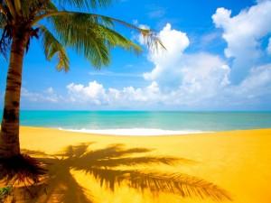 La sombra de una palmera sobre la arena de una playa