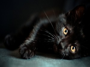 Postal: Un gato negro tumbado