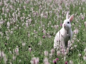 Postal: Un  conejo blanco entre flores
