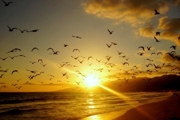 Gaviotas volando sobre una playa al amanecer