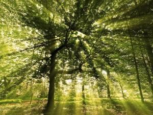 Un soleado bosque