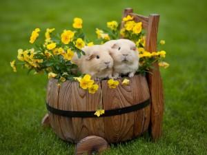 Conejillos de Indias sobre unas flores amarillas