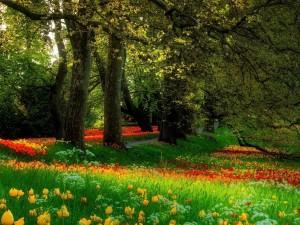 Flores y árboles en un parque