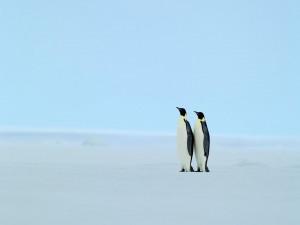 Dos pingüinos solos sobre el hielo