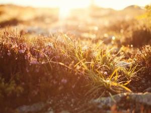 El sol iluminando las plantas solvestres