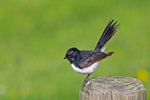 Pájaro posado en un tronco