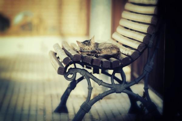 Gatito dormido sobre un banco de madera