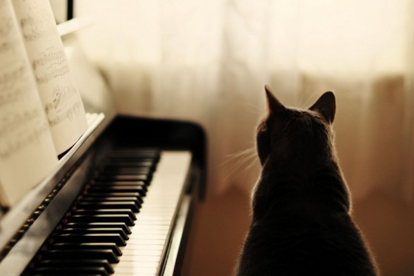 Gato negro junto a un piano