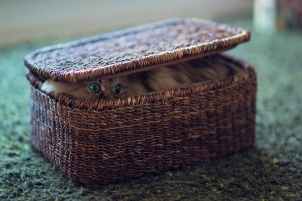 Gato escondido en una caja de mimbre