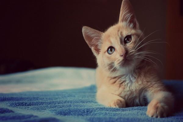 Bonita mirada de un gato