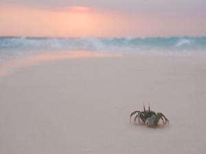 Cangrejo caminando sobre la arena blanca de una playa