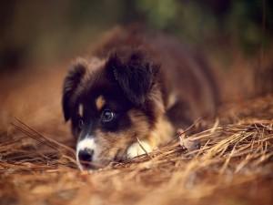 Un bonito perro tumbado en el bosque