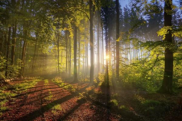 Sol entre los árboles de un bosque