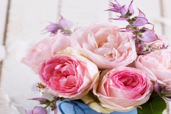 Bellas rosas rosadas