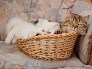 Postal: Dos gatos dentro de una cesta