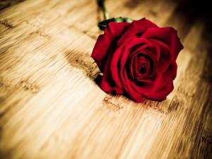 Rosa roja sobre una mesa de madera
