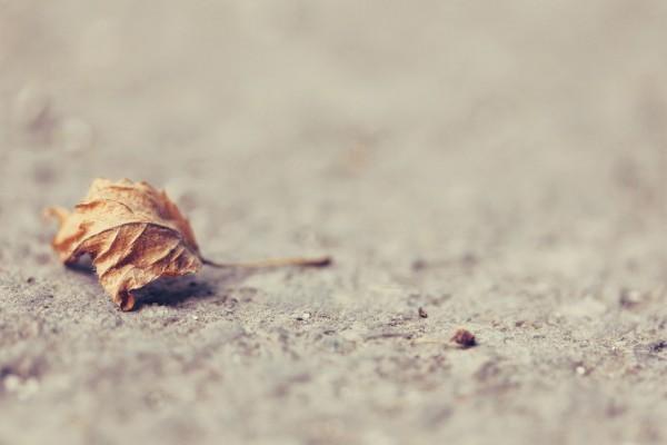 Hoja seca sobre el asfalto