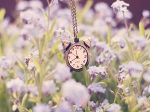 Bonito reloj en un campo de flores