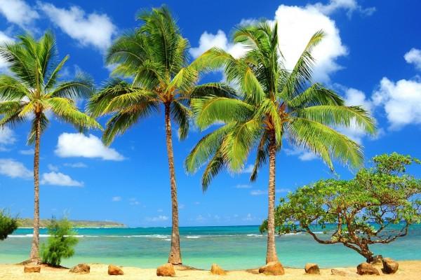 Pequeño árbol junto a tres palmeras en una playa