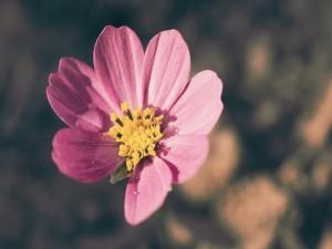 Postal: Flor de color rosa