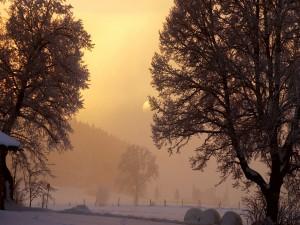 Maravilloso campo cubierto de nieve
