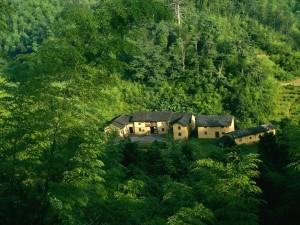 Postal: Casas en un bosque