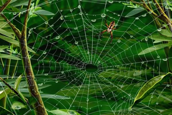 Araña caminando en la tela