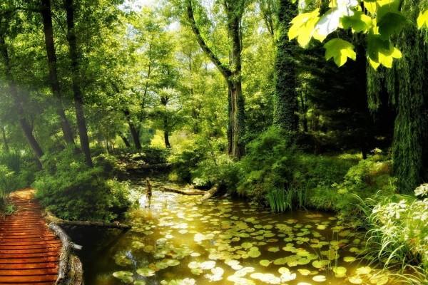 Rincón hermoso en la naturaleza