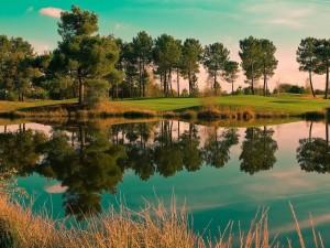 Árboles reflejados en un lago