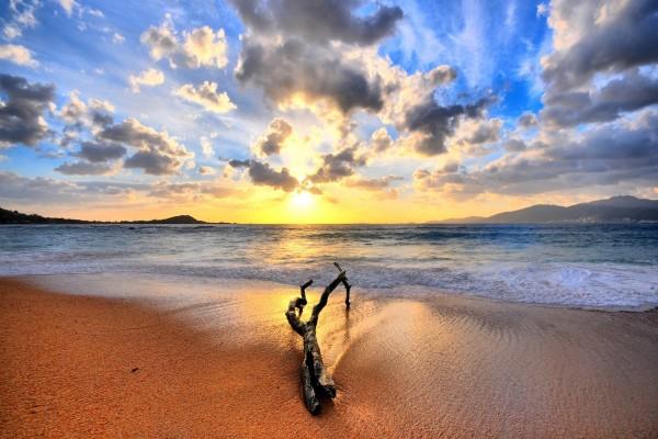 Tronco sobre la arena de una playa