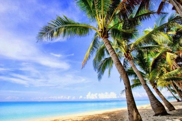 Palmeras en una playa desierta