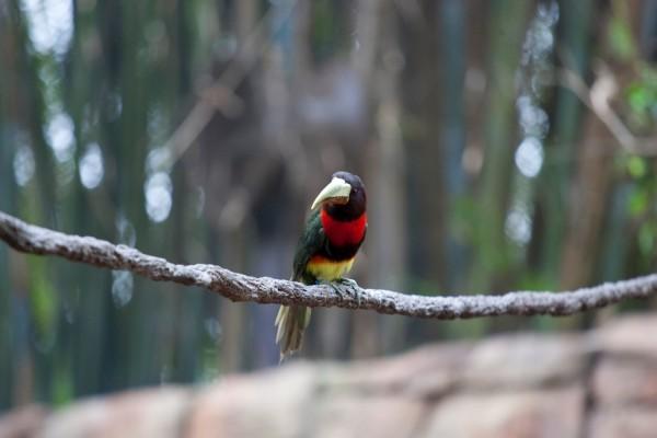 Pájaro de gran pico sobre una rama