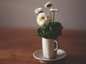 Flores blancas dentro de una taza