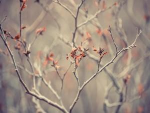 Postal: Las ramas de un árbol a finales del otoño