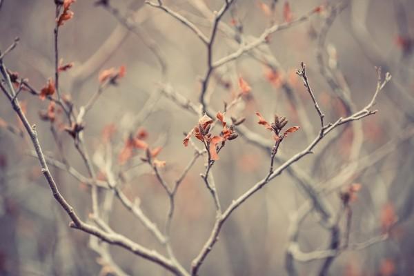 Las ramas de un árbol a finales del otoño