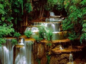 Hermosas cascadas entre árboles verdes