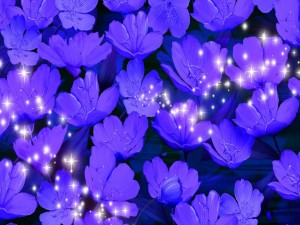 Postal: Resplandecientes flores color púrpura
