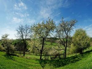 Árboles floreciendo al comienzo de la primavera