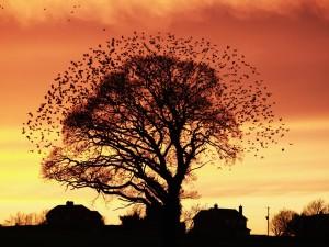 Aves en torno a un árbol