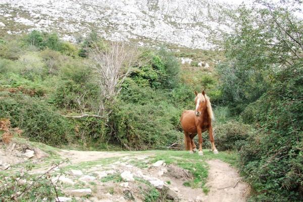 Una yegua embarazada en las montañas