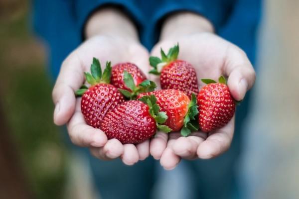 Manos llenas de fresas