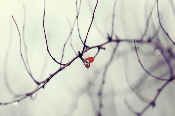 Pequeña hoja en las ramas desnudas de un árbol
