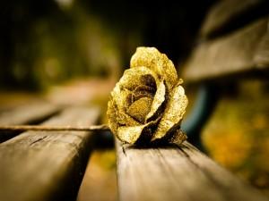 Postal: Rosa dorada sobre un banco